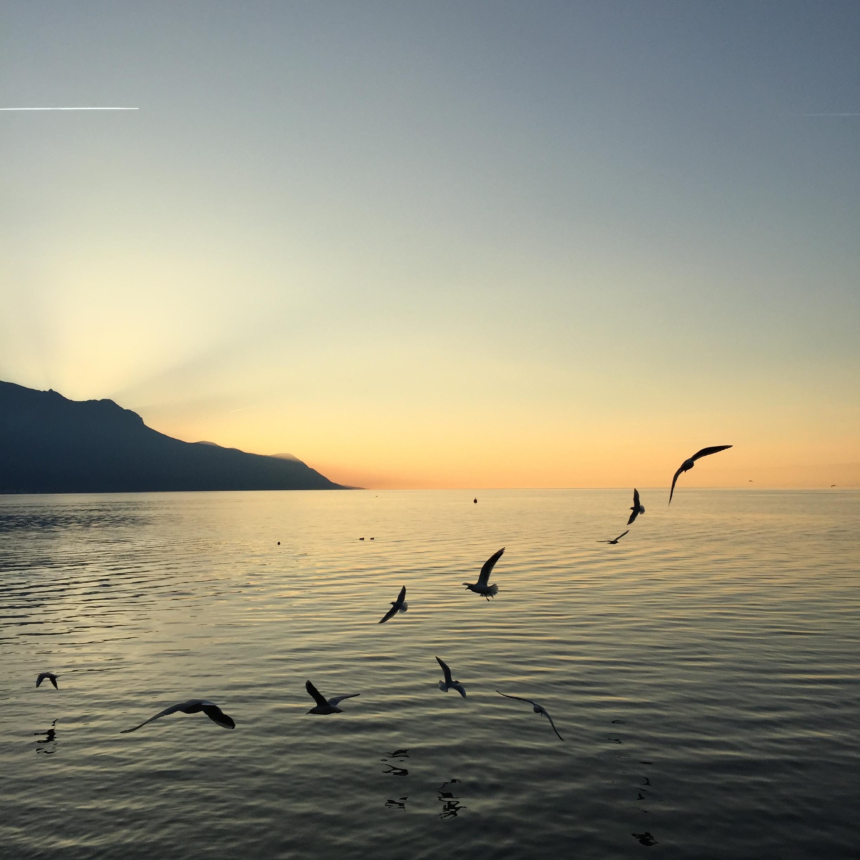 Montreux 11