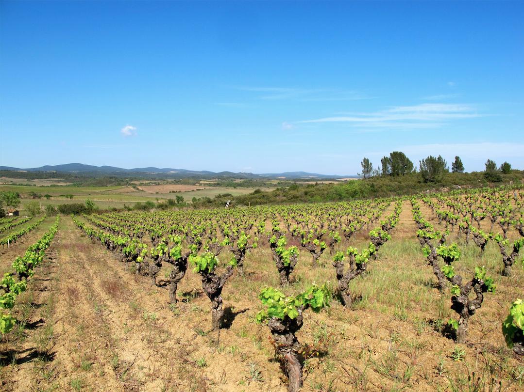 D couvrir faug res avec l 39 ancienne mercerie lost in wine for Mercerie nimes
