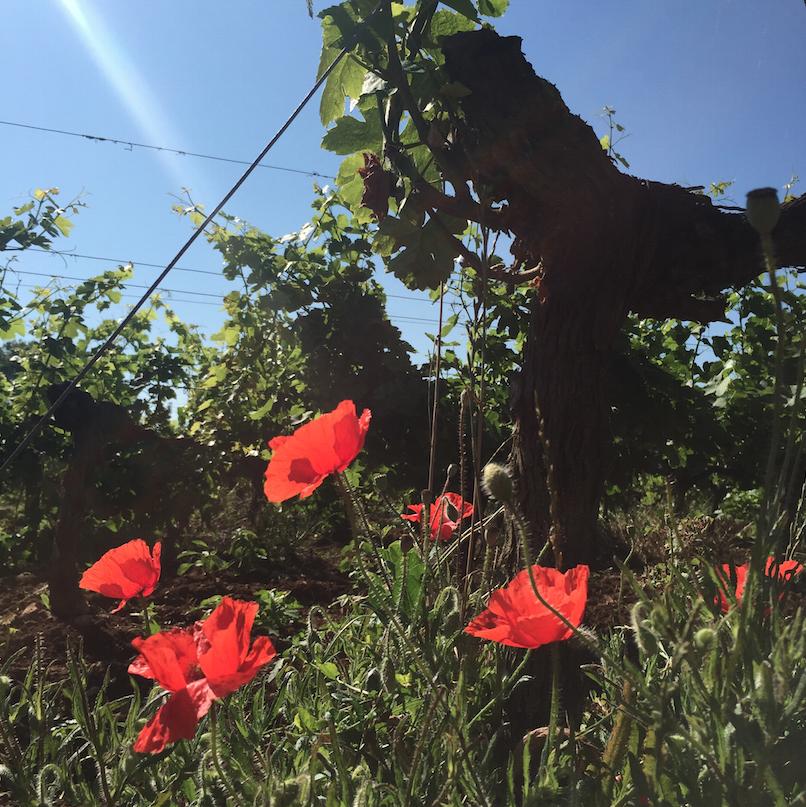 escapade en Charentes 3