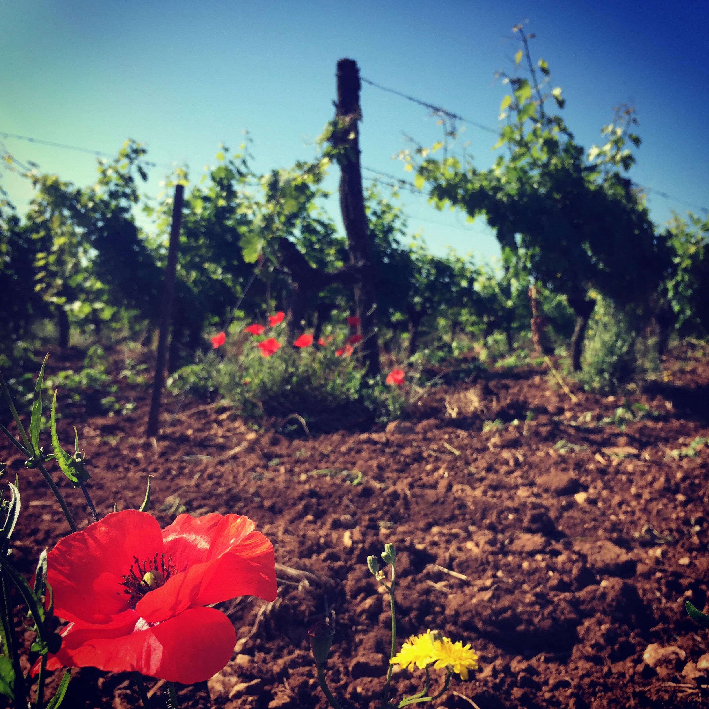 escapade en Charentes 6